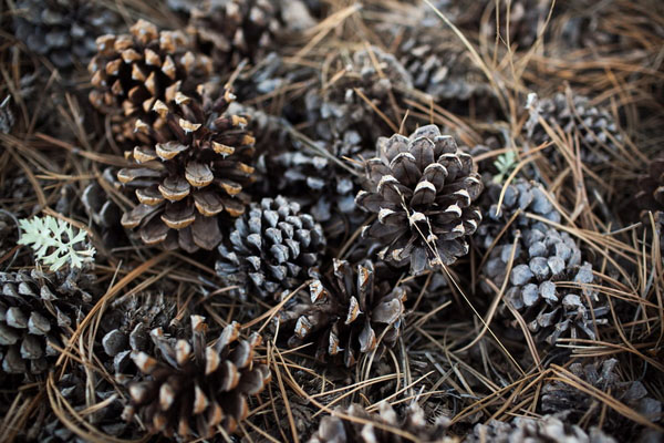 real wedding, wedding photography, rustic wedding, country chic, pine cones, outdoor ceremony, first look, private first dance, autumn wedding, jewel tones, autumnal colours, Root Photography (12)